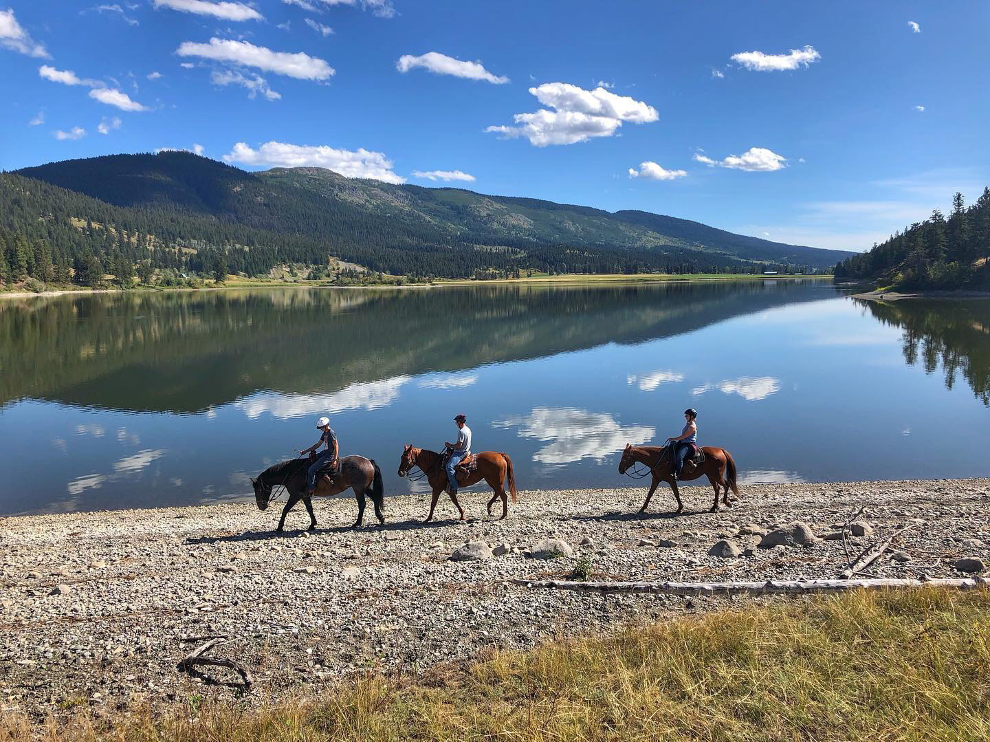 workaway, helpx, food and accommodation, volunteering, volunteer, hospitality exchange, free accommodation, horses, ranch, farm, horsemanship, riding a horse, Canada